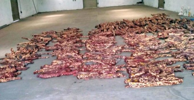 Red Sanders worth Rs 5 crore seized at Chennai port
