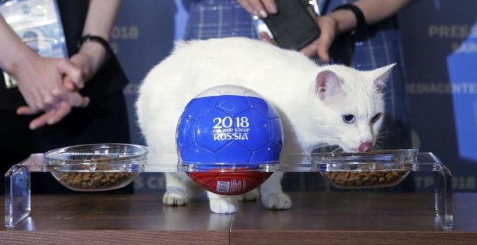 Paw-fect call! Psychic cat Achilles gets prediction spot on in FIFA World Cup opener