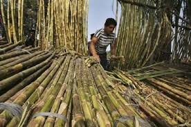 Govt may announce Rs 8,000 crore package to bail out sugar sector
