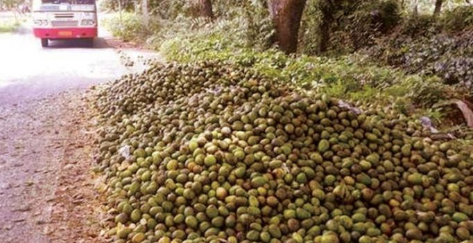 Karnataka: Mangoes turn sour for farmers! Govt offers MSP of Rs 2.50 a kg