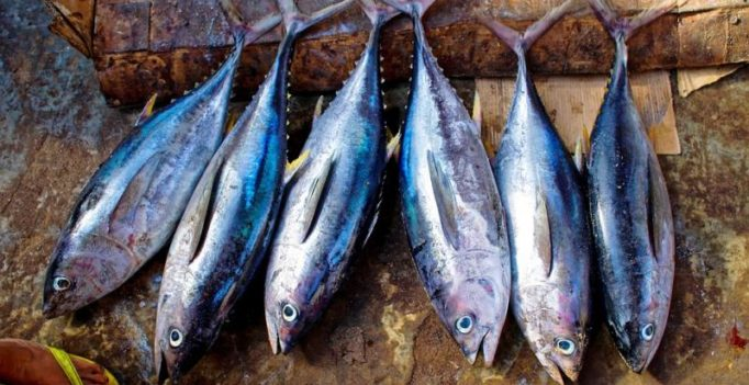 Eating oily fish reduces risk of premature birth for pregnant women, says study