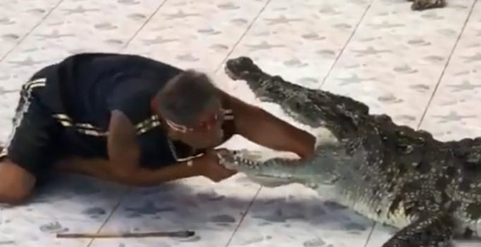 Video: Crocodile attacks reptile handler as he puts his hand in its mouth