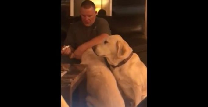Watch: Man pretends to give one of his 2 dogs ear drop so he doesn't feel left out