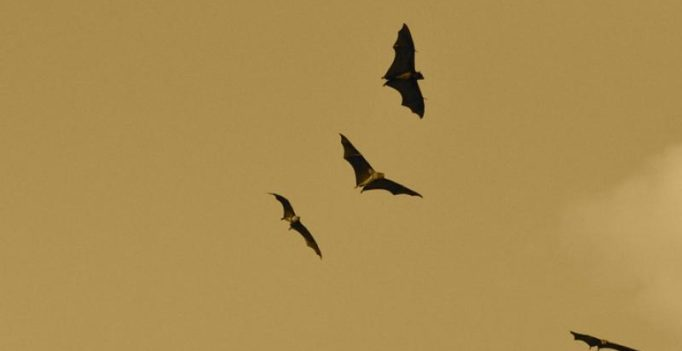 Scientists create robotic bat to map environments using sound