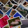 Google Image Search Lets You Save Images For Later With Stars