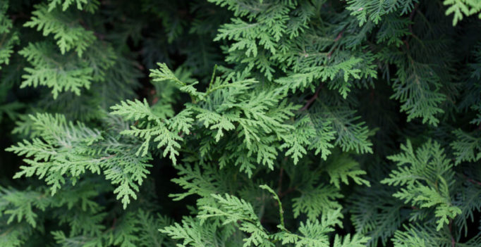 Planting The Seeds For An Evergreen Content Strategy