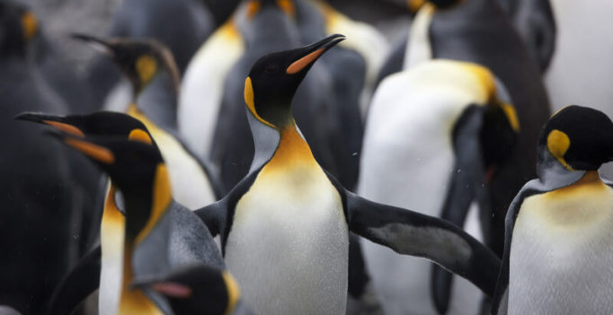 3 practical local link-building ideas that will cure your Penguinitis